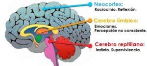 Tres-cerebros-en-uno