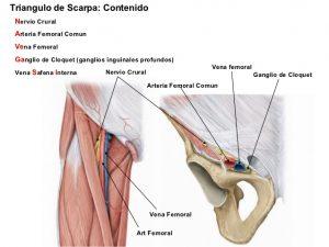 regiones-musculares-del-miembro-inferior-fichas-finales-23-638
